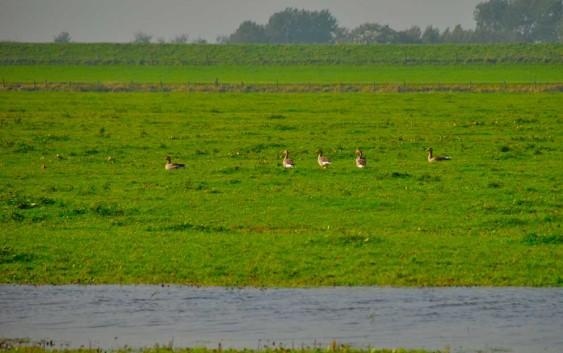 Niederlande: Vom Wattenmeer bis Pietersberg