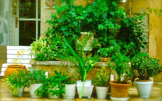 Grünzone: Wie der Garten ins Wohnzimmer kam