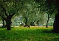 Spanien: Unberührte Landschaften